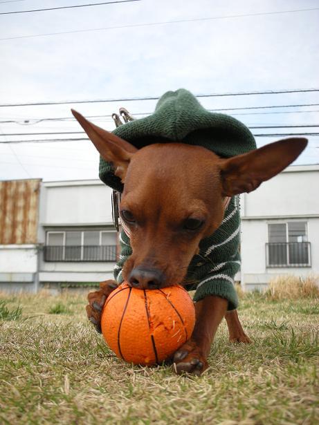 ボールは食べものじゃありませんよー