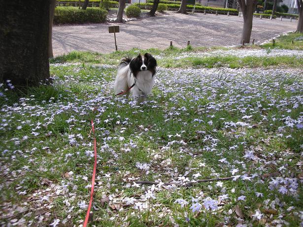 花畑でポーズ