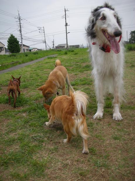 犬種もさまざま