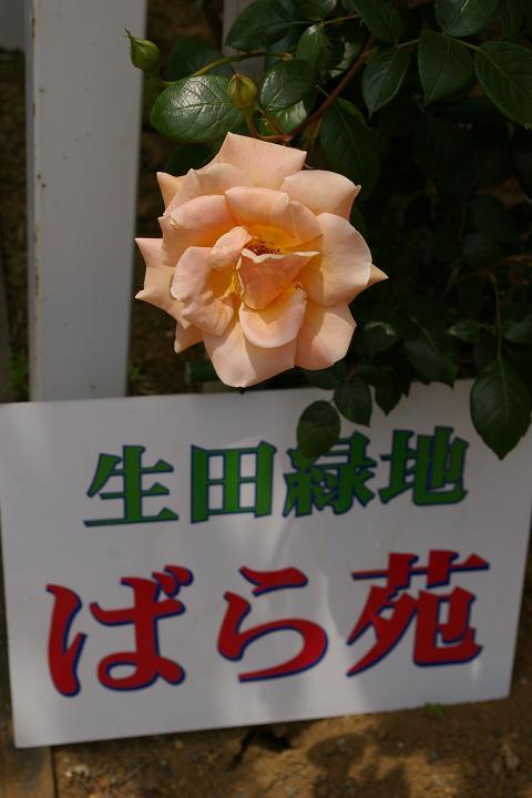 IMGP0246.JPG
