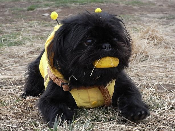 これがほんとうのハチクロですよ