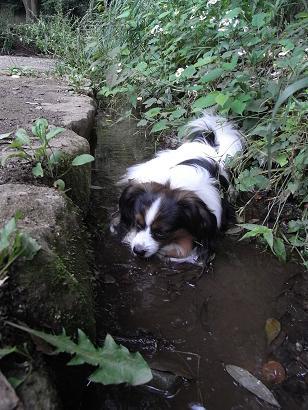 もちろん、川底は泥である
