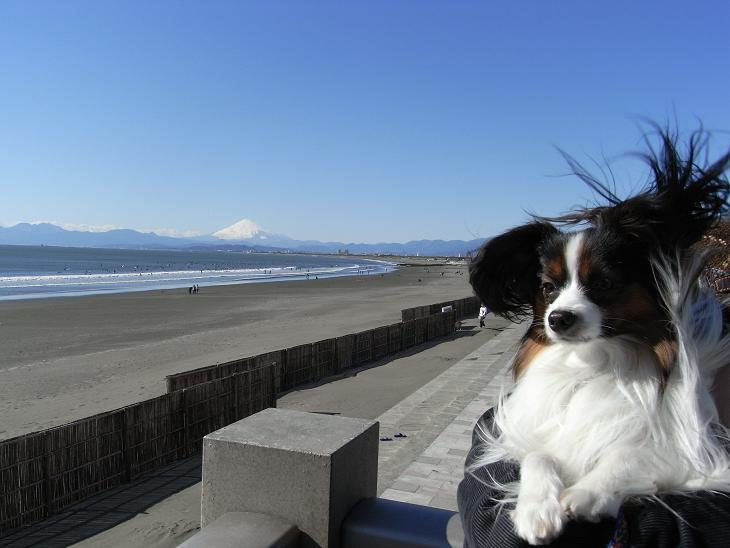 青空と富士山と強風に乱れまくるモサ毛